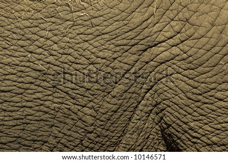 Close-up of a part of an elephant skin. - stock photo