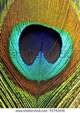 Close up of a peacock feather - stock photo