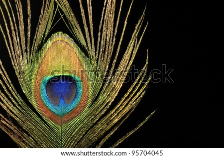 Close up of a peacock feather on black background - stock photo