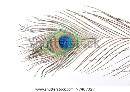 Close up of a Peacock feather on white background - stock photo