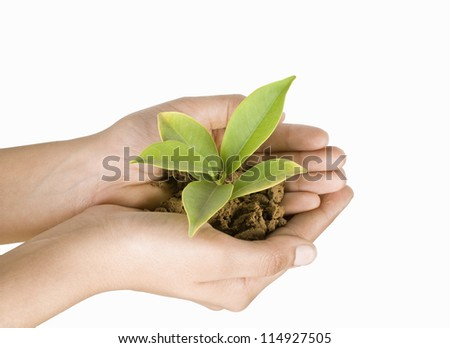 Close-up of a person's hand holding a sapling
