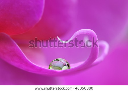 Close-up of a phalaenopsis with a beautiful water-drop - stock photo