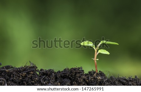 Close up of a plant sprouting from the ground with vivid green bokeh background - stock photo