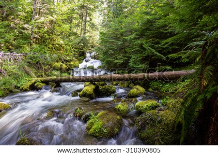 close up of a pristine spring flowing thru the woods in Oregon