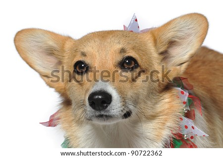 Close-up of a puppy in colorful collar with bells looking up