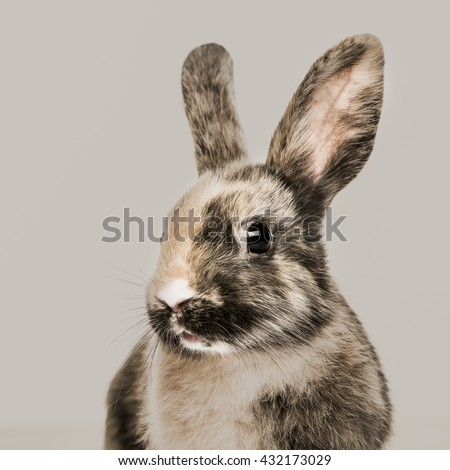 Close-up of a Rabbit against a beige background - stock photo