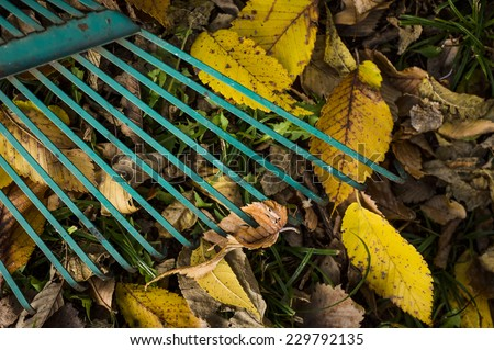 close up of a rake and leaves - stock photo
