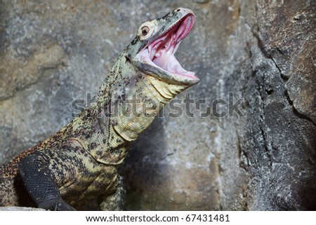 lizardsmouth stock images royaltyfree images  vectors