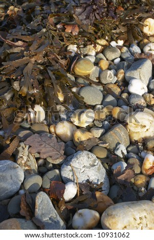 Close up of a rocky beach with seaweed and dry leaves in late afternoon sunlight.