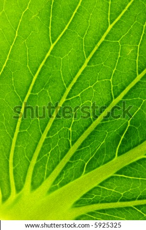 close up of a salad leaf texture with yellow lines