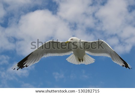 Close up of a seabird - stock photo