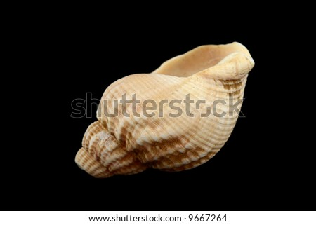 close up of a seashell isolated on black background