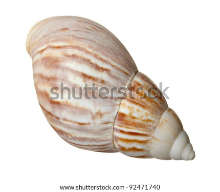 close up of  a seashell on  white background with clipping path
