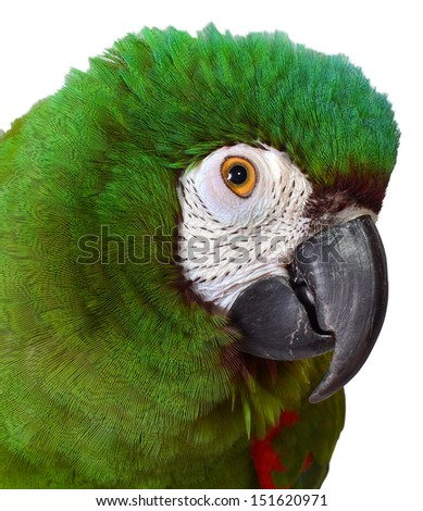 Close up of a Severe Macaw - stock photo