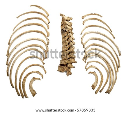 close up of a skeleton on white background with clipping path - stock photo
