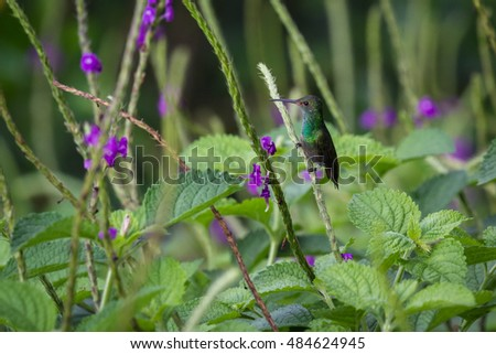 close up of a small hummingbird perched on a green stem surrounded by purple flowers