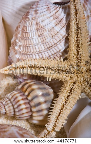 Close up of A Small Starfish and Shells - stock photo