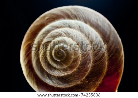 close up of a snail shell - stock photo