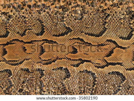 close-up of a snake skin - stock photo