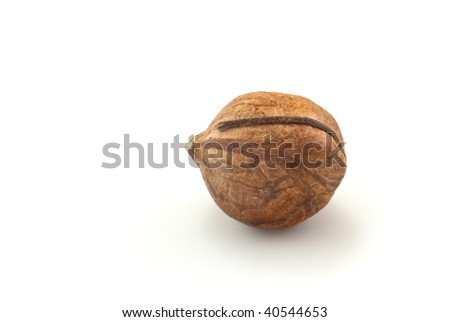 Close-up of a solitary shelled hazelnut, shadow visible, isolated on a white background, with copy space.