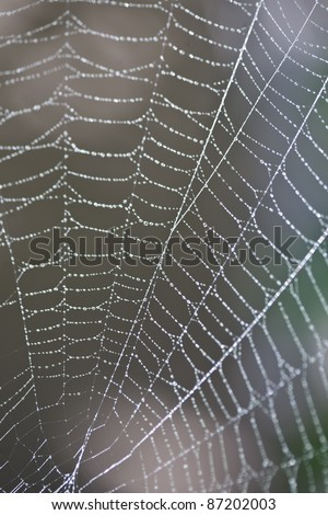Close-up of a spider web in dew - stock photo
