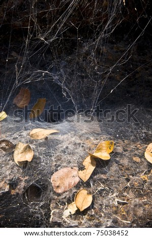 close-up of a spiderweb with shallow dof - stock photo