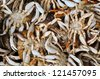 Close-up of a stack of freshly caught Dungeness crab. From the Oregon coast. - stock photo