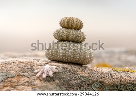 Close up of a stack of sea urchins on a coastal rock - stock photo