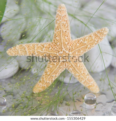 Close-up of a starfish - maritime spa decoration