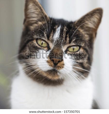 Close-up of a street cat wild cat domestic animal - stock photo