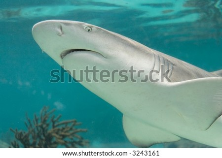 Close up of a swimming shark - stock photo