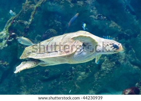 close up of a turtle swimming underwater