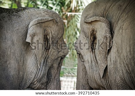 close up of a two elephants close to each other - stock photo