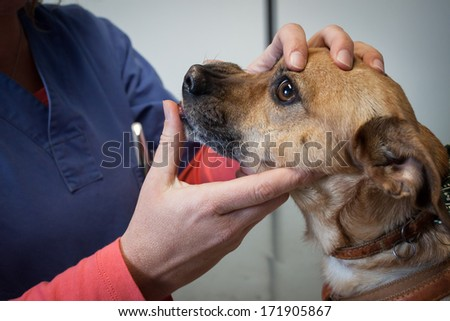 Close up of a veterinarian examining a dog's teeth