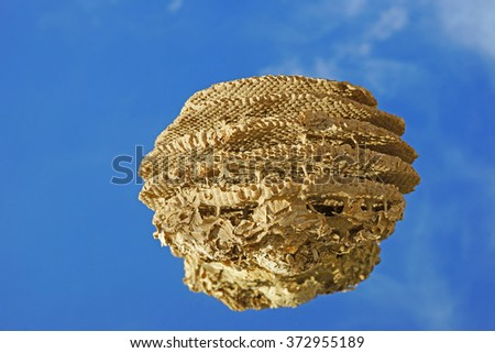 Close up of a wasps', Vespula vulgaris, nest also known as Common Wasp and European Wasp with a blue sky background, Gloucestershire, UK - stock photo