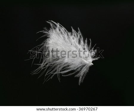 Close-up of a white feather on a black background - stock photo