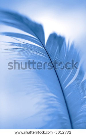 Close-up of a white feather on a blue background - stock photo