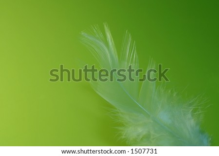 Close-up of a white feather on a lime green background. Macro photograph: shallow depth of field! - stock photo