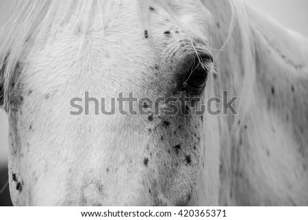 CLOSE UP OF A WHITE HORSE'S EYE IN BLACK AND WHITE - stock photo