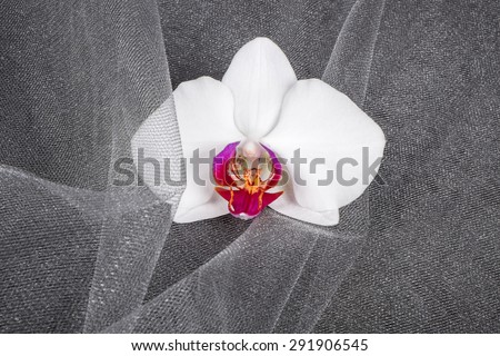 Close up of a White Orchid Flower on Gray Tulle Fabric - stock photo