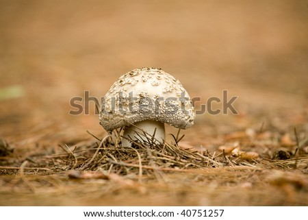 Close-up of a wild mushroom in its natural habitat - stock photo