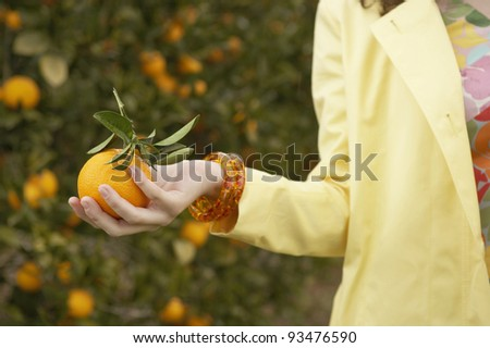 Close up of a woman's hand holding a freshly picked orange while in an orange grove. - stock photo
