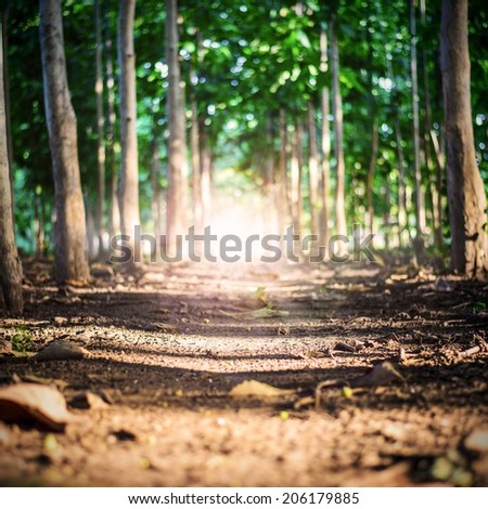 Close up of a woodland path. - stock photo