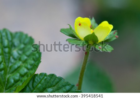 Close up of a yellow flower with red mites - stock photo