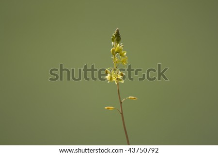 Close up of a yellow plant in early growth on a green background. - stock photo