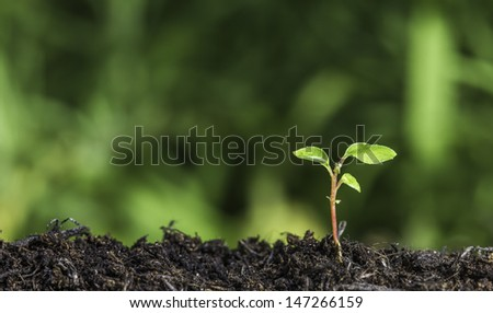 Close up of a young plant sprouting from the ground with green bokeh background - stock photo