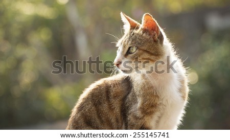 Close Up of An Alley Cat Sitting And Staring Into The Far Left With Selective Focus on Its Eye. The Sunlight Illuminated The Fur of The Cat's Contour.  Against Background of Green Leaves.  - stock photo