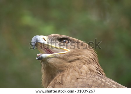 close up of an eagle - stock photo