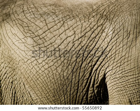Close up of an elephants wrinkled skin - stock photo