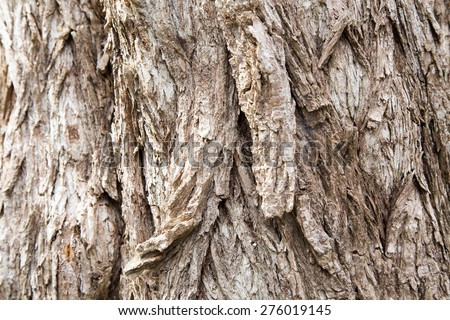 Close up of an old growth tree in the Medway Heritage forest, London Ontario Canada - stock photo